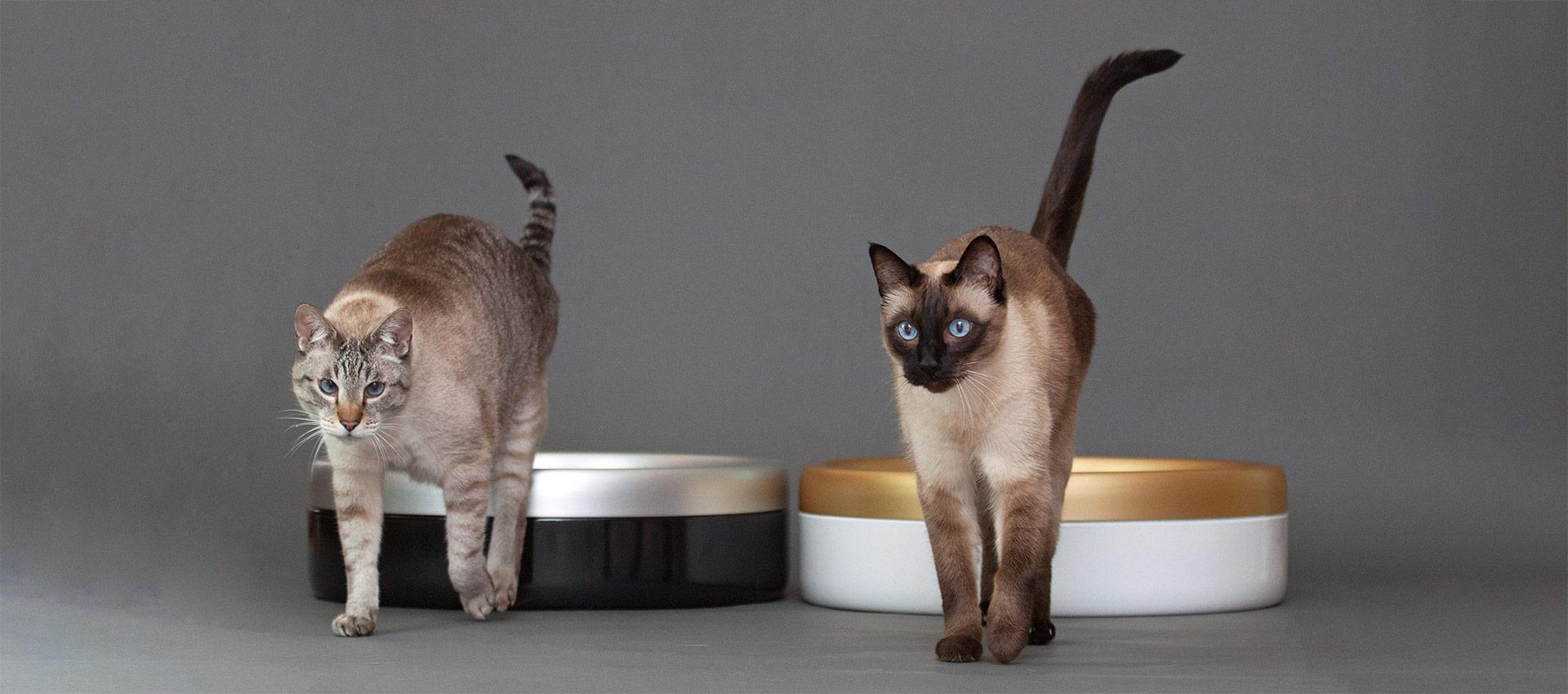 katchit-katzentoilette-kratzfest-geruchlos-cat-litter-box-Emaille-odorless-hygienic-scratch-resistant-zgi-ojok